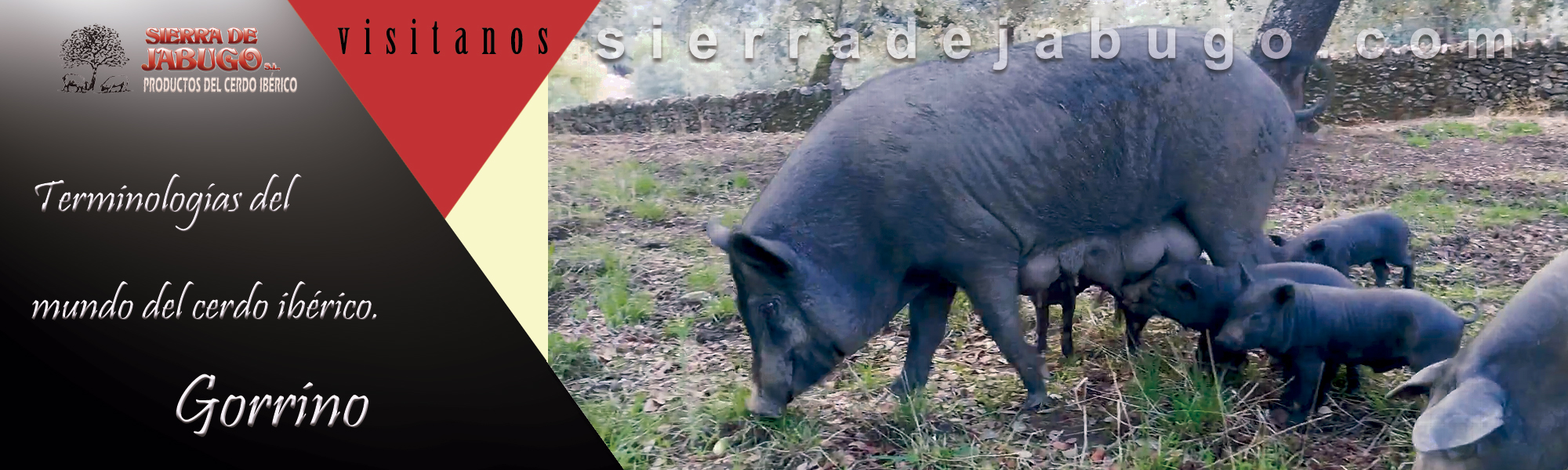 Words related to the world of the Iberian pig